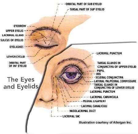 pink eye toronto eye clinic